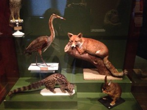 © De fil en archive - La vitrine des animaux du Museum et rapport avec le cycle de la Dame à la licorne.