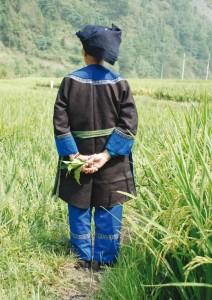 Teinturière un « brin d'indigo » dans la main – Guizhou,  CHINE  © Catherine Legrand